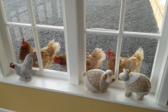 Chickens outside window